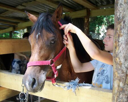 bridle: Lazarevskoe, Sochi, Russia - June 28, 2014: The teenager put a bridle on a horse