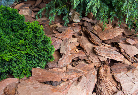 Mulching plants pine tree bark