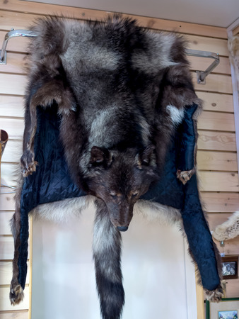pelt: Wolf pelt hangs on the wall in the gift shop of the city of St. Petersburg