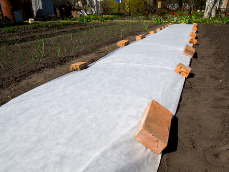 白い材料をカバーは、苗を寒さから保護するために地面に広がる 写真素材