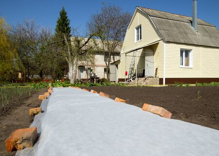 Voronezh, Russia - April 30, 2017: Seedbed covered with cover material in the garden plot Editorial