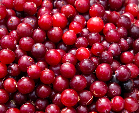 Background made up of a variety of fresh cranberries Stock Photo