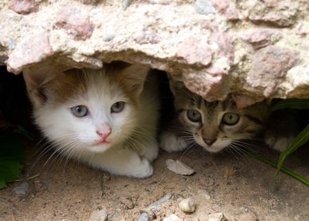 Two homeless kittens peep out of hiding