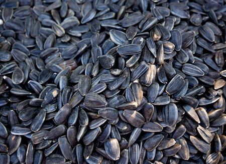 Background from scattered on the table of fried sunflower seeds Banco de Imagens