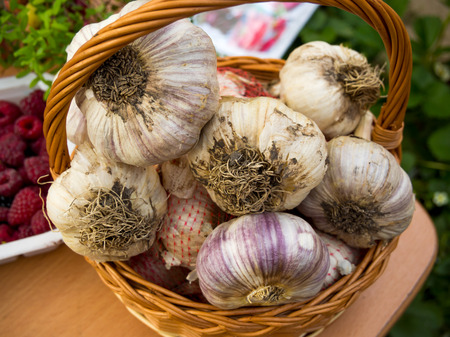 Large heads of garlic are in a wicker basket Stock Photo