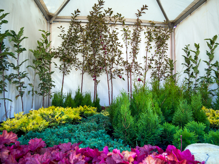 Ornamental plants in the pavilion at the agricultural trade fair