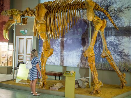 The skeleton of dinoteria. Exhibit of the Azov Paleontological Museum.