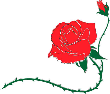 burgeoning: Decorative pattern burgeoning flower red rose and a small bud. Can be use like a frame Illustration
