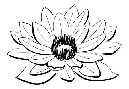 single sketch: Vector Black and White Lotus flower drawn in sketch style. Line art Illustration
