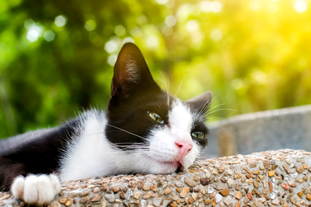 The lazy cat sleeping in the park at the morning