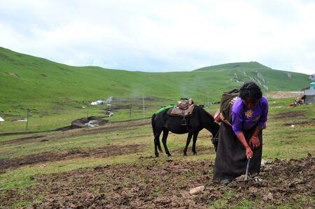 working woman: woman working on the farmland