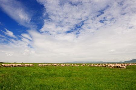 cloud capped: Ruoergai grassland
