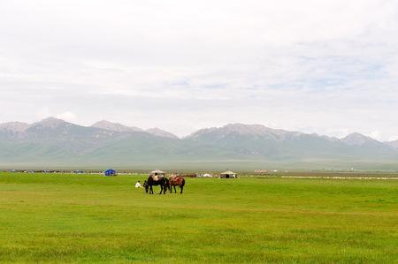 grassland: Ruoergai grassland