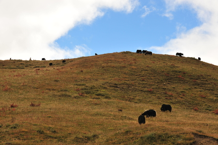 cloud capped: Tower of the grassland