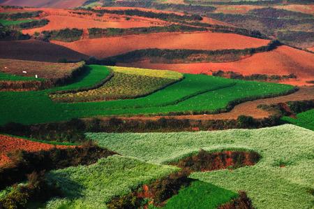 dirt: red dirt