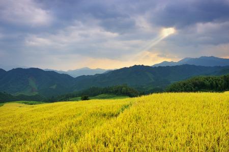 Ujia village terrace
