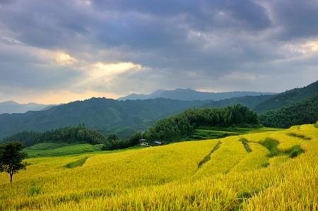 the terraced fields