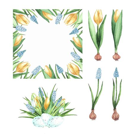 Set of beautiful watercolor illustrations with yellow tulips - square frame, floral arrangement and single flowers. Isolated elements on a white background. Design for printing on cards, invitations, textiles, fabric and packaging. 免版税图像