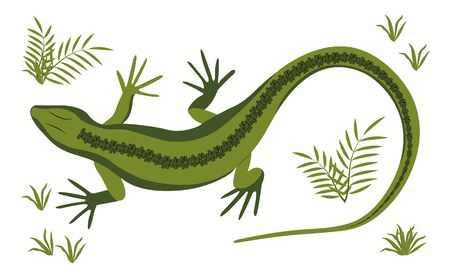 Green lizard vector illustration. Reptile with long body and tail, four legs and green skin. Design for poster, web site, card.