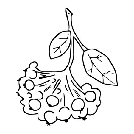 Vector illustration depicting a branch with rowan berries. Drawn by hand in doodle style. Sample element isolated on white. Design for coloring, design packaging tea or herbs, cards, fabrics, poster Vettoriali