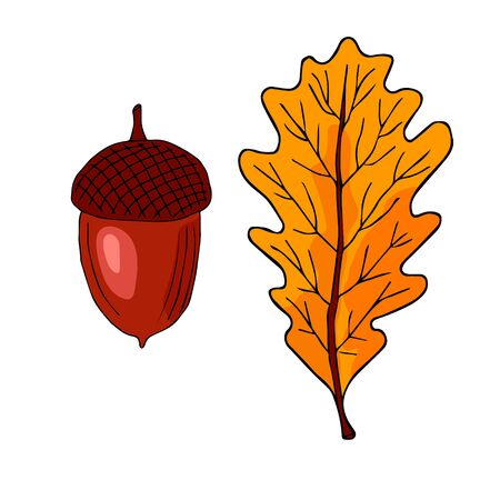 Acorn oak hand drawn ink illustration in painting technique. Isolated vintage clipart of forest foliage leaf. Graphic design of decorative elements for cards, invitations, posters and social networks.