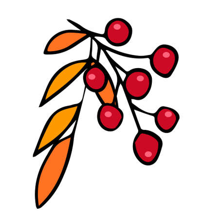 Vector illustration depicting a berry branch, hand drawn in doodle style. Design for decorating a recipe, menu, book page, coloring book, invitation. Illustration