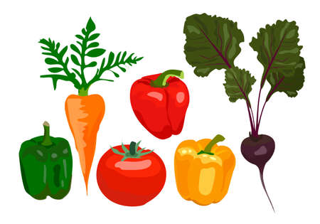 Vegetable set, organic ingredients. Tomato, beets, carrots, peppers on a white background. Can be used for menu labels, dishes, poster.