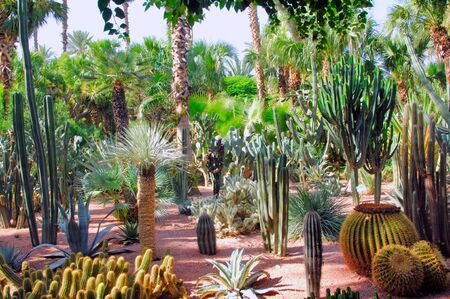 mediteranean: Morocco, Marrakech, Marrakesh: green and silverpalm trees and cactus. the typical regional flore  Stock Photo