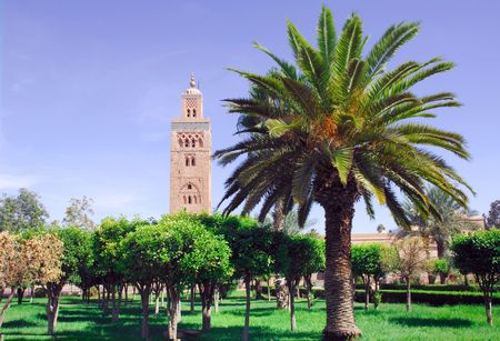 marrakesh: Morocco, Marrakesh, marrakech: the Koutoubia; view of the big mosquee from the palm tree garden; red stone, blue sky and green palm trees