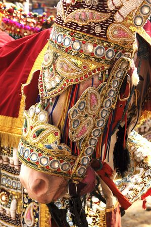 India Jaipur decorated horse for a wedding; traditional golden thread for a ceremonial  horse dress Stock Photo - 2870901