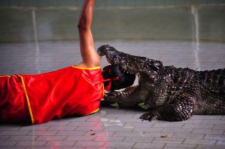 farme: Una vista di uno spettacolo su farme di un coccodrillo in Thailandia