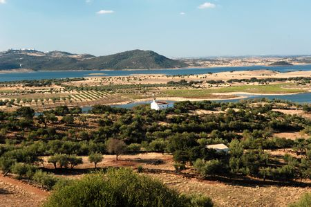 Portugal; alentejo; typical landscape; blue sky and a half- desertic climat for this view with few olive trees Stock Photo - 3572015