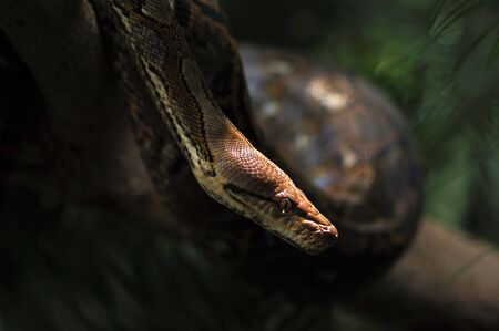 picture of a dangerous python photo