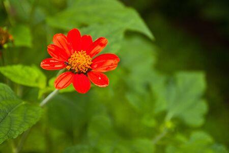 Red flower in the graden