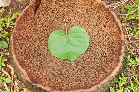 Stump with a heart-shape leaf