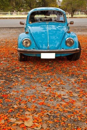 Old car with the leaves Stock Photo