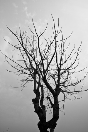 Dead tree in the B&W picture
