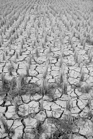 Dead land in conutryside Thailand Stock Photo - 9403408