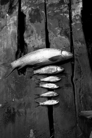 Dead fishes in the wooden bridge Stock Photo - 9403403