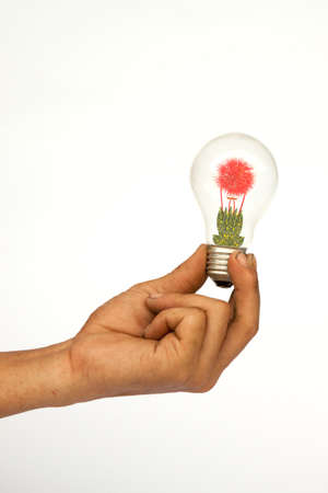 The bulb with the plants Stock Photo - 9744522