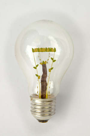 The bulb with the plants Stock Photo - 9744520