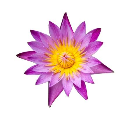 The purple lotus in isolation Stock Photo - 9898886