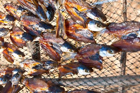 overfishing: Fish drying in South Thailand Stock Photo