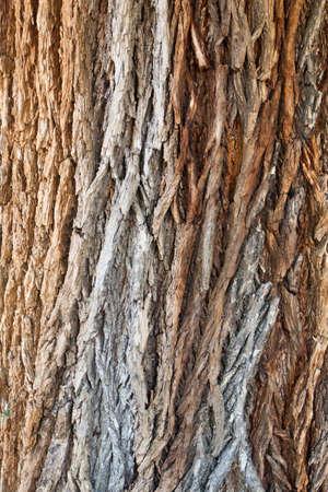 bark background texture pattern  photo