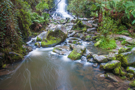 waterfall in the rain forest photo