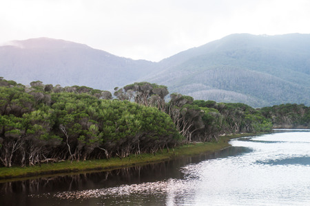 The lake with the trees