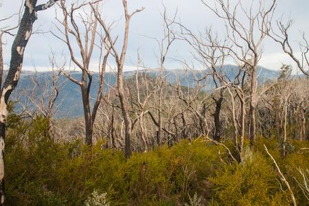 The bushfire in Victoria Melbourne Stock Photo