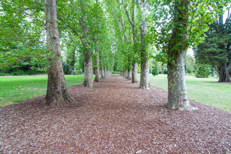 the path in the park