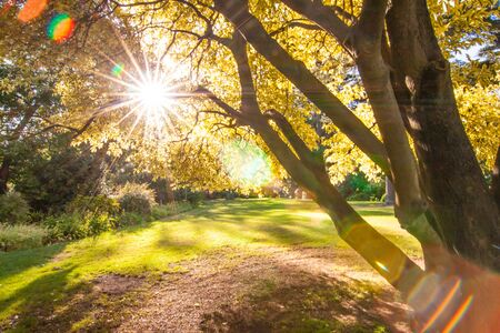 the park in Melbourne Australia