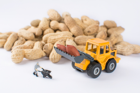 Miniature workman and excavator machine transporting peanuts Stock Photo